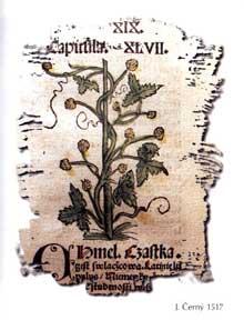 herbal history   herbal folklore